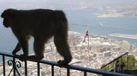 Private Full-Day Gibraltar Tour from Marbella
