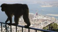 Private Full-Day Gibraltar Tour from Marbella or Malaga