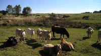 Private Full Day Trip to a Winery and Cattle Ranch