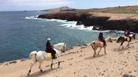 Private Half-Day Beach Horse Riding Tour in Gran Canaria