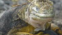 5-Day Galapagos Islands Highlights Tour