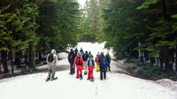 Hollyburn Peak Snowshoeing and Photography Tour