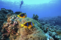 Full-Day Catalina Island Scuba Diving Tour from La Romana