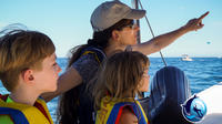 Humpback Whale Watching in Cabo San Lucas