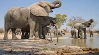 2-Day Amboseli National Park Safari From Nairobi