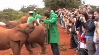 Half-Day David Sheldrick Elephant Orphanage, Giraffe Manor, and Karen Blixen Museum Tour from Nairobi