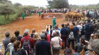 Nairobi National Park Tour, David Sheldrick Elephant Orphanage, Giraffes & Karen Blixen Museum Tour In Nairobi
