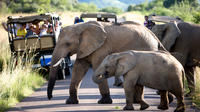 Pilanesberg Game Reserve Full-Day Tour from Johannesburg