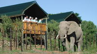 Private Addo Elephant National Park Day Tour from Port Elizabeth