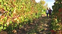 Private Cape Winelands Tour Including Franschhoek from Cape Town