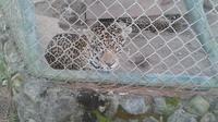 Anton Valley and Nispero Zoo Day Trip from Panama City