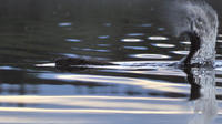 Beaver Safari by Canoe in Svartadalen