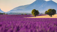 Small-Group Guided Day-Trip to Valensole from Avignon