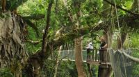 Day Trip to Mount Kinabalu Poring Rainforest