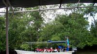 Half-Day Tour Klias Wetland Cruise And Fireflies In Kota Kinabalu