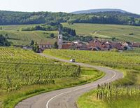 Alsace Wine Route Half-Day Wine Tasting Tour from Strasbourg*
