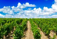 Médoc Half-Day Wine Tour from Bordeaux