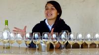 Half Day Maipo Valley Concha y Toro Vineyard