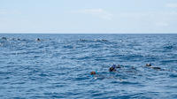 Swimming with Dolphins at Portugal's Terceira Island