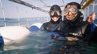 Full-Day Private Great White Shark Cage Diving and Wine Tasting Experience from Cape Town