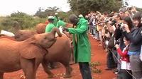 Full-Day Baby Elephant Orphanage and Giraffe Center Tour from Nairobi