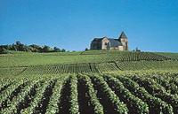 Champagne Region Day Trip from Paris by Minivan