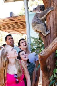 Small-Group Nura Diya Aboriginal Discovery Tour at Taronga Zoo