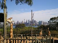 Sydney Taronga Zoo's Australian Animals Tour