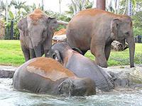 Sydney Taronga Zoo's Australian Animals Tour