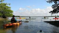 Happy Hour Kayak Tours In Sarasota