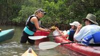 Mangrove Tunnel Kayak Eco-Tour