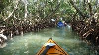 Mangrove Tunnel Eco Kayak Tour