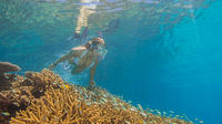 Great Barrier Reef Snorkel and Dive Cruise from Cairns by Luxury Catamaran