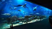 Skip the Line: S.E.A Aquarium Day Pass Including Hotel Pickup from Singapore