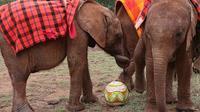 Elephant Orphanage and Giraffe Centre in Nairobi