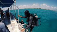 Discover Scuba Diving All-Inclusive Reef Tour