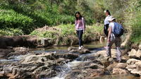 Small Group Bush Walk with Sinclair's Gully Winery Day Trip from Adelaide Including Lunch