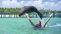 Fur Seal Encounter in Punta Cana