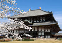 Nara Afternoon Tour of Todaiji Temple, Deer Park and Kasuga Shrine from Kyoto