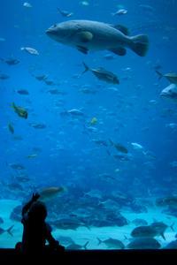 Osaka Aquarium Kaiyukan Admission with Osaka Bay Cruise