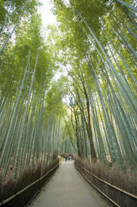 Sagano Bamboo Grove and Arashiyama Walking Tour With Yakatabune Lunch Cruise