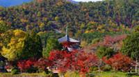 Autumn Leaves: Small-Group Arashiyama and Sagano Walking Tour