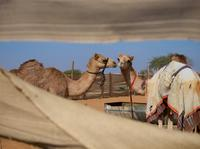 Al Ain City Sightseeing Tour - The Garden City