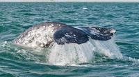 San Diego Whale Watching Tour