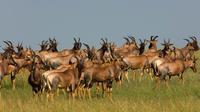 5-Day Lake Manyara Serengeti and Ngorongo Crater Camping Safari from Arusha