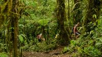 Half-Day Cerro Chato Volcano Hike from La Fortuna