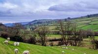Full-Day Yorkshire Dales Winter Tour from York