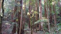 Muir Woods Tour from San Francisco