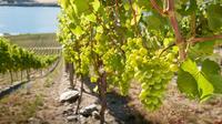 Shore Excursion: Blenheim Wine Tour from Picton