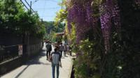 Kamakura Walking Tour: Explore Nature and History